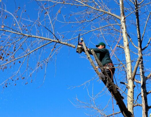 Contact Us-Wimauma FL Tree Trimming and Stump Grinding Services-We Offer Tree Trimming Services, Tree Removal, Tree Pruning, Tree Cutting, Residential and Commercial Tree Trimming Services, Storm Damage, Emergency Tree Removal, Land Clearing, Tree Companies, Tree Care Service, Stump Grinding, and we're the Best Tree Trimming Company Near You Guaranteed!