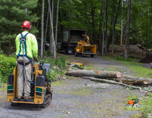Emergency Tree Removal-Wimauma FL Tree Trimming and Stump Grinding Services-We Offer Tree Trimming Services, Tree Removal, Tree Pruning, Tree Cutting, Residential and Commercial Tree Trimming Services, Storm Damage, Emergency Tree Removal, Land Clearing, Tree Companies, Tree Care Service, Stump Grinding, and we're the Best Tree Trimming Company Near You Guaranteed!