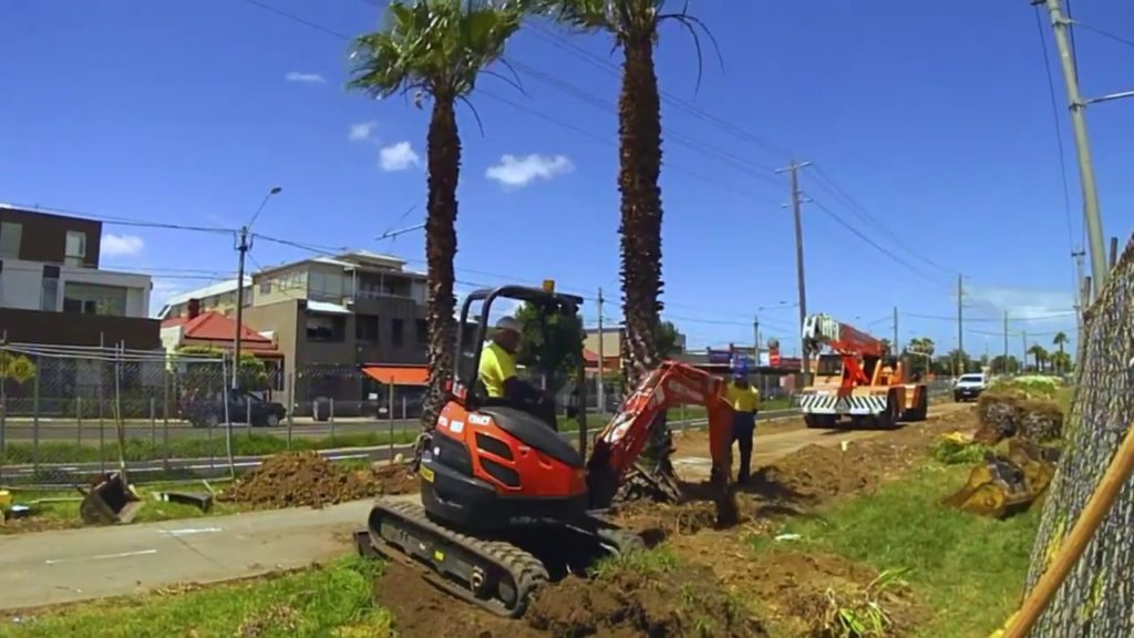 Palm Tree Removal-Wimauma FL Tree Trimming and Stump Grinding Services-We Offer Tree Trimming Services, Tree Removal, Tree Pruning, Tree Cutting, Residential and Commercial Tree Trimming Services, Storm Damage, Emergency Tree Removal, Land Clearing, Tree Companies, Tree Care Service, Stump Grinding, and we're the Best Tree Trimming Company Near You Guaranteed!