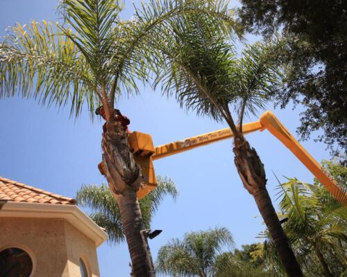 Palm Tree Trimming-Wimauma FL Tree Trimming and Stump Grinding Services-We Offer Tree Trimming Services, Tree Removal, Tree Pruning, Tree Cutting, Residential and Commercial Tree Trimming Services, Storm Damage, Emergency Tree Removal, Land Clearing, Tree Companies, Tree Care Service, Stump Grinding, and we're the Best Tree Trimming Company Near You Guaranteed!
