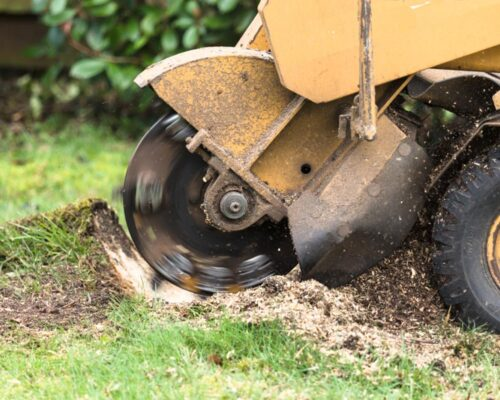 Stump Grinding-Wimauma FL Tree Trimming and Stump Grinding Services-We Offer Tree Trimming Services, Tree Removal, Tree Pruning, Tree Cutting, Residential and Commercial Tree Trimming Services, Storm Damage, Emergency Tree Removal, Land Clearing, Tree Companies, Tree Care Service, Stump Grinding, and we're the Best Tree Trimming Company Near You Guaranteed!