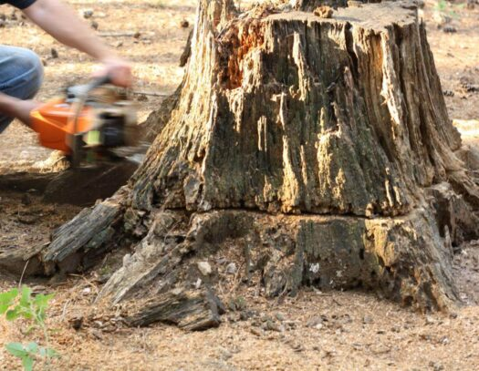 Stump Removal-Wimauma FL Tree Trimming and Stump Grinding Services-We Offer Tree Trimming Services, Tree Removal, Tree Pruning, Tree Cutting, Residential and Commercial Tree Trimming Services, Storm Damage, Emergency Tree Removal, Land Clearing, Tree Companies, Tree Care Service, Stump Grinding, and we're the Best Tree Trimming Company Near You Guaranteed!