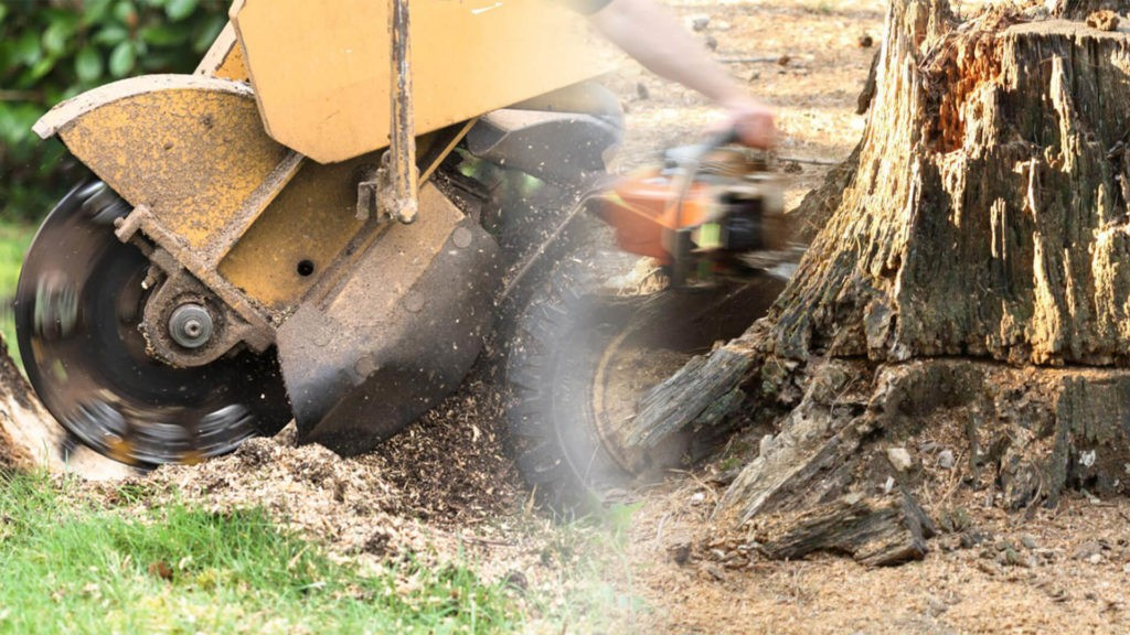 Stump grinding & removal-Wimauma FL Tree Trimming and Stump Grinding Services-We Offer Tree Trimming Services, Tree Removal, Tree Pruning, Tree Cutting, Residential and Commercial Tree Trimming Services, Storm Damage, Emergency Tree Removal, Land Clearing, Tree Companies, Tree Care Service, Stump Grinding, and we're the Best Tree Trimming Company Near You Guaranteed!