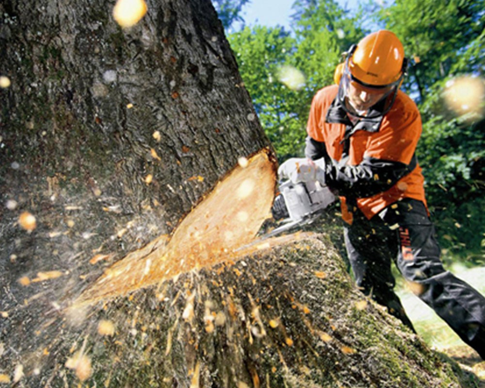 Tree Cutting-Wimauma FL Tree Trimming and Stump Grinding Services-We Offer Tree Trimming Services, Tree Removal, Tree Pruning, Tree Cutting, Residential and Commercial Tree Trimming Services, Storm Damage, Emergency Tree Removal, Land Clearing, Tree Companies, Tree Care Service, Stump Grinding, and we're the Best Tree Trimming Company Near You Guaranteed!