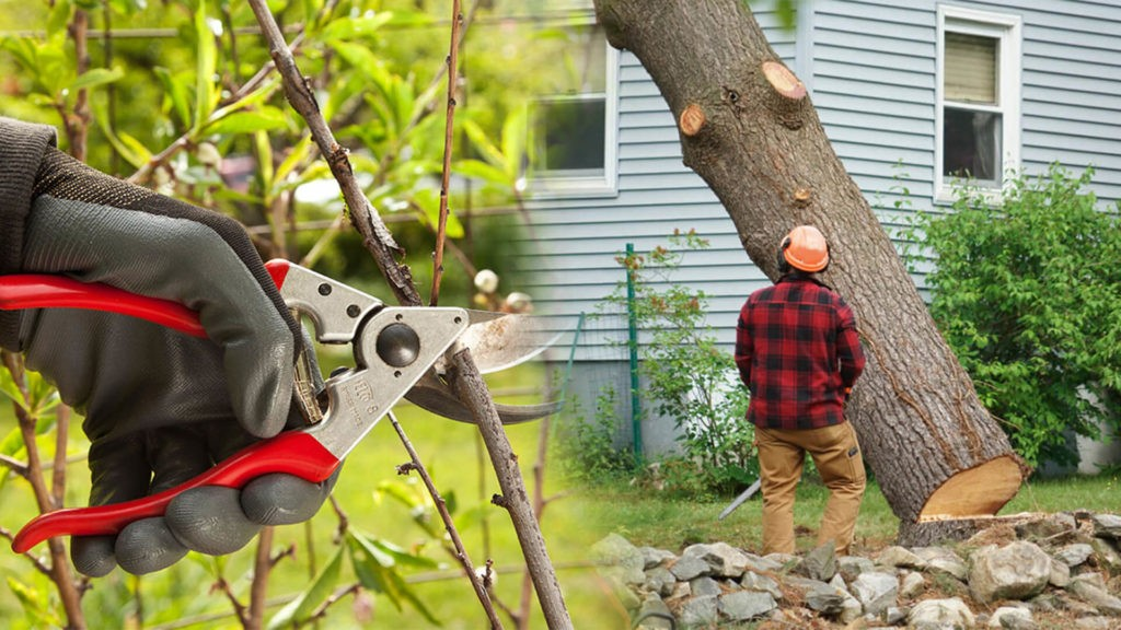 Tree pruning & tree removal-Wimauma FL Tree Trimming and Stump Grinding Services-We Offer Tree Trimming Services, Tree Removal, Tree Pruning, Tree Cutting, Residential and Commercial Tree Trimming Services, Storm Damage, Emergency Tree Removal, Land Clearing, Tree Companies, Tree Care Service, Stump Grinding, and we're the Best Tree Trimming Company Near You Guaranteed!
