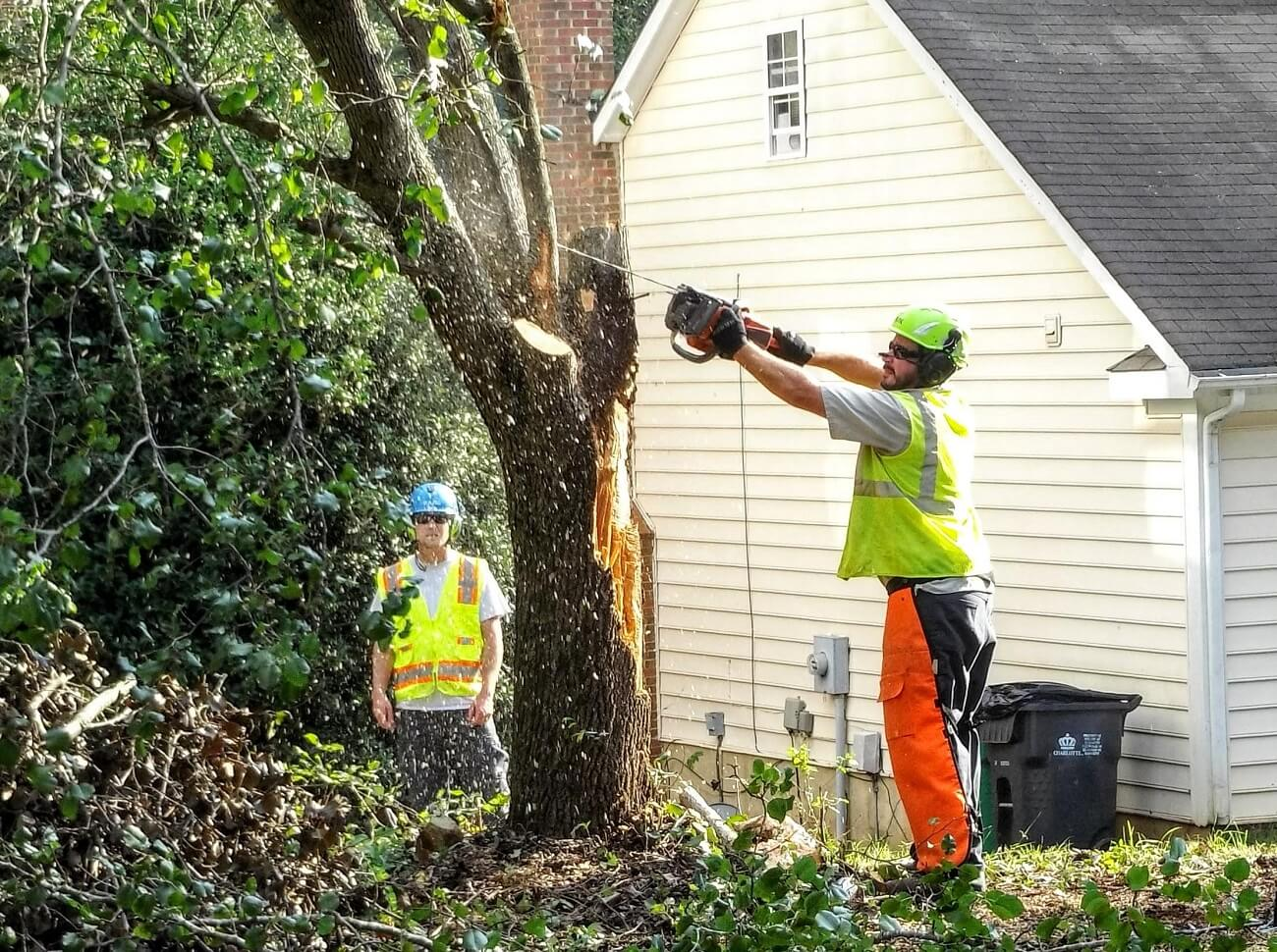 Wimauma FL Tree Trimming and Stump Grinding Services Home Page Image-We Offer Tree Trimming Services, Tree Removal, Tree Pruning, Tree Cutting, Residential and Commercial Tree Trimming Services, Storm Damage, Emergency Tree Removal, Land Clearing, Tree Companies, Tree Care Service, Stump Grinding, and we're the Best Tree Trimming Company Near You Guaranteed!